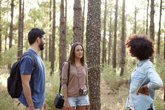 Discussion de groupe dans la forêt de pin Photo stock