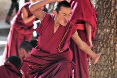 Discussione delle rane pescarici nel Tibet Immagini Stock