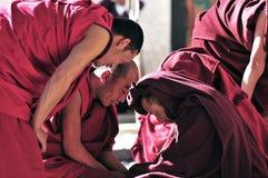 Discussione delle rane pescarici nel Tibet Fotografie Stock Libere da Diritti