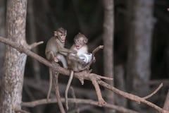 Discutindo macacos Fotografia de Stock