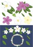 Diseñe con las flores del plumeria Imagenes de archivo