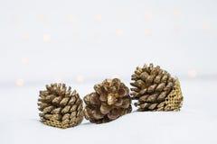 Diseñe la flor seca del cono del pino en la arena blanca sobre bokeh ligero borroso en el fondo blanco Imagen de archivo