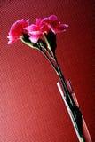 Diseño abstracto del fondo del clavel Fotografía de archivo