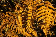 Diseño abstracto del otoño Fotos de archivo