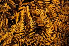 Diseño abstracto del otoño Fotografía de archivo libre de regalías