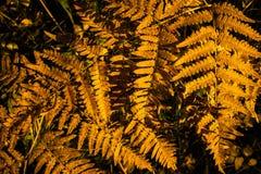 Diseño abstracto del otoño Imagen de archivo libre de regalías