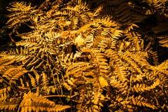 Diseño abstracto del otoño Fotos de archivo libres de regalías