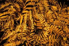 Diseño abstracto del otoño Foto de archivo libre de regalías