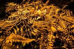 Diseño abstracto del otoño Imagenes de archivo