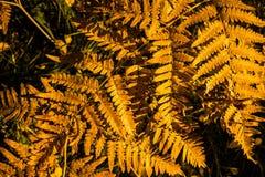 Diseño abstracto del otoño Foto de archivo
