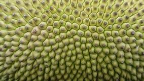 Diseño ascendente del cierre del verde de la fruta de Jack imagen de archivo libre de regalías