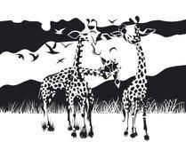 Diseño blanco y negro de tres jirafas stock de ilustración