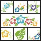 Diseño con las flores de hibiscos Foto de archivo