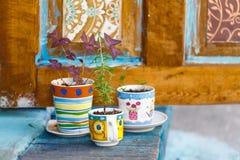Diseño creativo del taller con las flores en taza Imagen de archivo libre de regalías