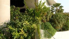 Diseño de alameda en concepto respetuoso del medio ambiente verde Jardín de ejecución del aire abierto en terrazas Eco futurista metrajes