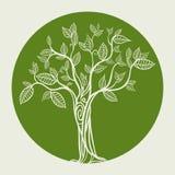 Diseño de Eco