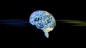 Diseño de la animación de cerebro humano que recibe la entrada de conocimiento lógico y de la creatividad de la imaginación en la ilustración del vector
