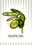 Diseño de la etiqueta del aceite de oliva del vector Las aceitunas de la acuarela aislaron el ejemplo libre illustration