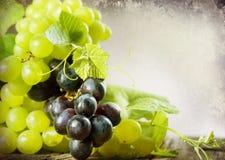 Diseño de la frontera de las uvas imágenes de archivo libres de regalías