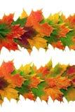 Diseño de la hoja de arce Imagen de archivo libre de regalías