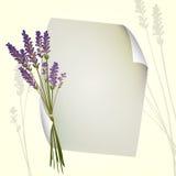 Diseño de la lavanda Fotografía de archivo libre de regalías
