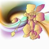 Diseño de la orquídea stock de ilustración