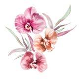 Diseño de la orquídea de la acuarela stock de ilustración