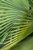 Diseño de la palma Foto de archivo libre de regalías