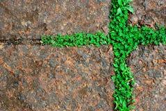 Diseño de la textura del fondo de la hierba verde de musgo Imagen de archivo