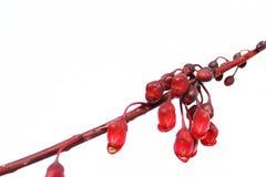 Diseño de las flores Foto de archivo libre de regalías
