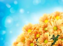 Diseño de las flores Fotografía de archivo libre de regalías