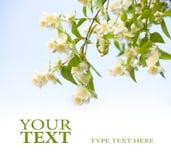 Diseño de las flores Imagenes de archivo