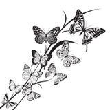 Diseño de las mariposas Foto de archivo