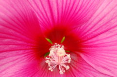 Diseño de Nature Fotografía de archivo
