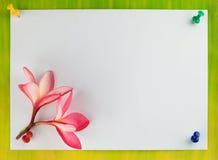 Diseño de tarjeta, frangipani (plumeria) Fotografía de archivo libre de regalías