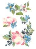 Diseño decorativo de la colección de flores y de hojas de la acuarela en estilo del vintage Imagen de archivo libre de regalías