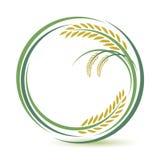 Diseño del arroz Imágenes de archivo libres de regalías