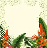 Diseño del fondo con las flores de la ave del paraíso Fotos de archivo libres de regalías