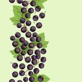 Diseño del fondo de la naturaleza con las grosellas negras Imagen de archivo