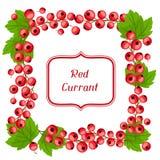 Diseño del fondo de la naturaleza con las pasas rojas Imágenes de archivo libres de regalías