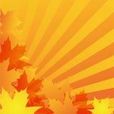 Diseño del fondo del otoño Foto de archivo
