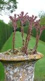Diseño 2 del jardín Imagenes de archivo