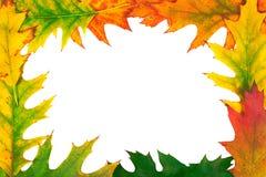Diseño del otoño Imagenes de archivo