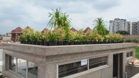 Diseño del paisaje de la hierba de templo fotos de archivo libres de regalías