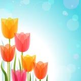 Diseño del tulipán Foto de archivo libre de regalías