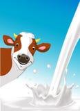 Diseño del vector con la vaca y la leche de colada Fotografía de archivo