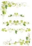 Diseño del viñedo stock de ilustración