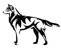 Diseño derecho del vector del lobo Fotos de archivo libres de regalías