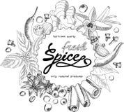 Diseño dibujado mano de las especias libre illustration