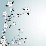Diseño floral Foto de archivo